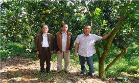 """Mô hình """"vườn an toàn, hiệu quả"""" ở Hà Giang"""