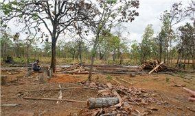 """""""Lách luật"""" để hưởng lợi từ rừng?"""