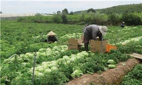 Giải quyết đất sản xuất cho đồng bào DTTS ở Lâm Đồng