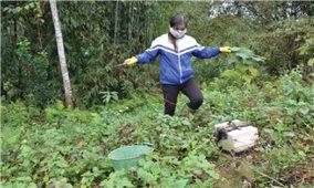 Tận diệt giun đất ở Phú Thọ-Nguy cơ hủy diệt hệ sinh thái trong đất