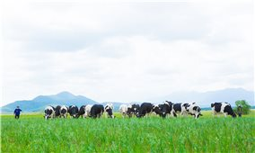 Công ty Cổ phần Sữa Việt Nam: Nỗ lực để hội nhập sâu vào sân chơi khu vực và toàn cầu