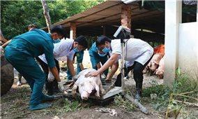 Cao Bằng: Người chăn nuôi vẫn mòn mỏi chờ kinh phí hỗ trợ