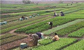 Gỡ vướng cho các doanh nghiệp đầu tư vào lĩnh vực nông nghiệp