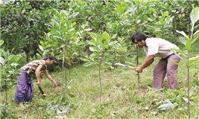Dự án hỗ trợ trồng rừng gỗ lớn ở Quảng Ngãi: Tiến độ ì ạch