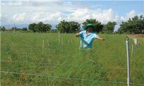 Ninh Thuận: Liên kết phát triển mô hình kinh tế HTX