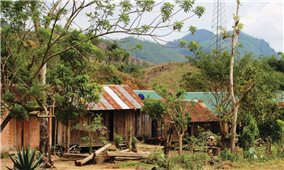 Tây Nguyên: Nhiều địa phương có nguy cơ bùng phát sốt rét