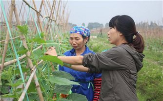 Hợp tác xã Rau sạch Yên Dũng: Giá trị sản xuất nông nghiệp tăng nhờ đi đầu ứng dụng công nghệ cao
