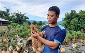 Hỗ trợ người dân nâng cao chất lượng sản phẩm gà Tiên Yên