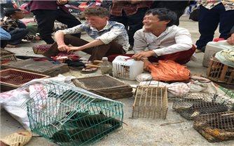 Công khai bán động vật hoang dã tại chợ phiên Bắc Hà