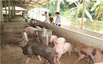 Phát triển chăn nuôi trang trại ở Thanh Hóa: Bước đệm để mở rộng quy mô sản xuất hàng hoá
