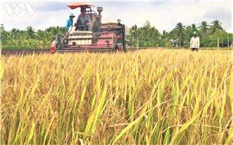 Lúa gạo tăng giá, doanh nghiệp và nông dân ĐBSCL phấn khởi.