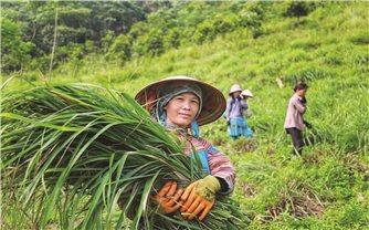 Bảo Yên (Lào Cai): Điểm sáng trong phát triển đảng viên người DTTS