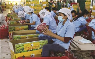 """Nông sản Việt chuẩn bị """"hành trang"""" sang EU"""