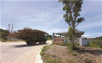 Hà Tĩnh: Doanh nghiệp gỗ gây ô nhiễm môi trường