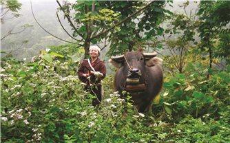 Hòa Bình: Phát triển chăn nuôi gắn với thế mạnh từng vùng