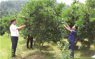 EVFTA: Đưa nông sản Việt vào chuỗi cung ứng toàn cầu