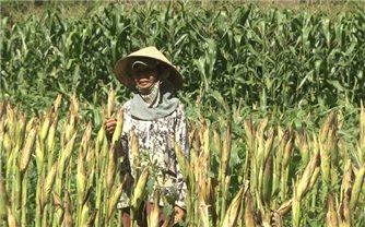 Mô hình nông nghiệp CSA nâng cao nhận thức của nông dân