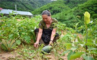 """Quan Sơn: Hiệu quả từ Chương trình """"Không còn nạn đói"""""""