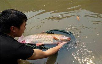 Đồng bào Mường ở xã Nhân Mỹ thành công với mô hình nuôi cá quý