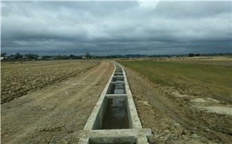 Đăk Nông: Cánh đồng lúa khô hạn bên công trình thủy lợi trăm tỷ