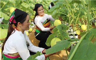 Bất cập trong các dự án hỗ trợ giống cây trồng, vật nuôi: Cần phải trao