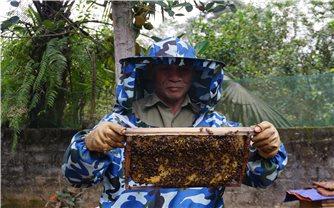 Thu nhập cao từ nghề nuôi ong