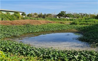 Đồng Nai: Mạnh tay xử lý những trang trại chăn nuôi gây ô nhiễm