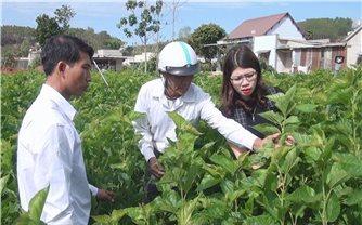 Lâm Hà (Lâm Đồng): Chương trình 135 góp phần làm thay đổi đời sống đồng bào DTTS