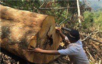 Khánh Vĩnh (Khánh Hòa): Rừng đầu nguồn bị phá nghiêm trọng, các ngành chức năng không hay biết?