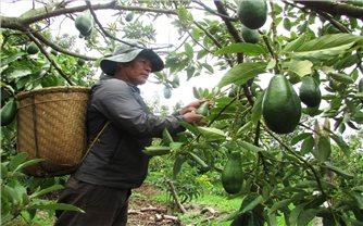 Nông dân Tây Nguyên cần một giải pháp căn cơ cho thị trường nông sản