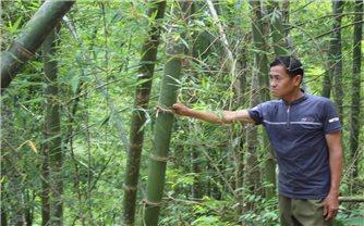 Cây thoát nghèo ở huyện miền núi Quan Sơn