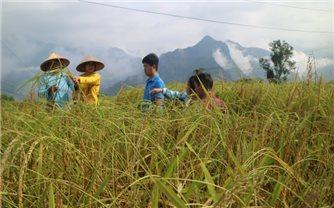 Sản xuất nông nghiệp ở miền núi trước biến đổi khí hậu: Gỡ rào cản để nông nghiệp chuyển mình (Bài cuối)