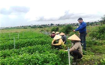 Khởi nghiệp thành công từ mô hình liên kết tiêu thụ nông sản