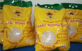 Lai tạo thành công giống lúa mới từ nguồn gen lúa màu cổ truyền
