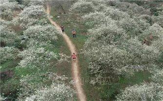 Khoảng 4.300 người tham gia giải chạy trên đường mòn tại Mộc Châu
