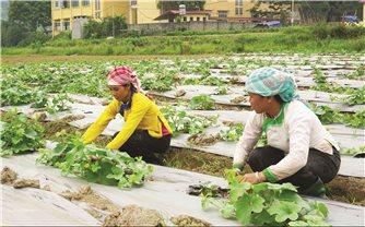 Phát huy nội lực của người dân trong công tác giảm nghèo: Nhìn từ Lào Cai