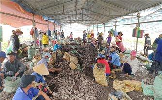 Đồng bằng Sông Cửu Long: Nông sản rớt giá, người dân lại khổ
