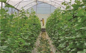 """Nhìn lại việc triển khai Nghị quyết """"Tam nông"""": Nông nghiệp """"chuyển mình"""" mạnh mẽ (Bài 1)"""