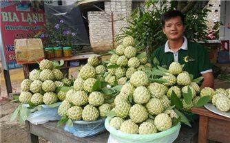 Lạng Sơn: Thúc đẩy tiêu thụ Na Chi Lăng và sản phẩm OCOP