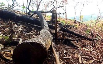 Bắc Giang: Phá rừng tại Sơn Động, 3 cá nhân bị phạt 21 triệu đồng