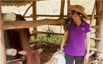 Thực hiện Quyết định 2085 ở Lào Cai: Hàng nghìn hộ thoát nghèo từ sử dụng hiệu quả vốn vay