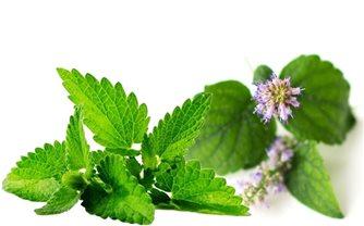 Bài thuốc chữa bệnh từ cây hoắc hương