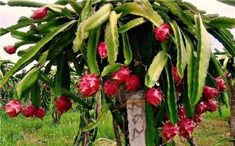 Sơn La: Kết nối, tiêu thụ nông sản, sản phẩm OCOP