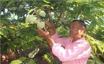 Quảng Yên - Một điểm sáng về kinh tế nông nghiệp ở Quảng Ninh