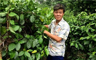 Tiến sĩ người Sán Chay bảo tồn cây thuốc quý