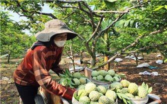Quảng Ninh: Thiếu sự ràng buộc, chuỗi liên kết sản xuất nông nghiệp đứt gãy