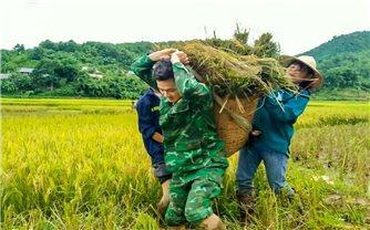 Bộ đội biên phòng Thanh Hóa giúp dân tránh bão