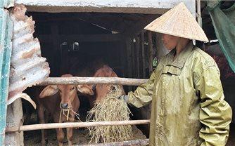 Các biện pháp bảo đảm an toàn cho vật nuôi trong mùa Đông