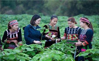 Lần đầu tiên Việt Nam có Chương trình truyền thông riêng về bình đẳng giới