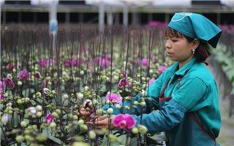 Đan Phượng: Phát triển mạnh sản phẩm OCOP